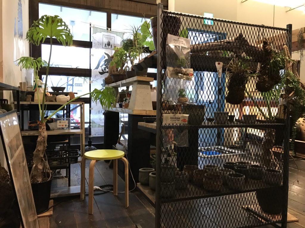 fanspacecafe-bonsai1